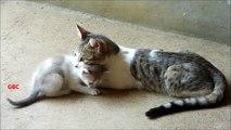 Dog saves kitten from biting cat