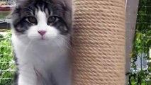 Katzenbabie Maine Coon XXL - süßes Kätzchen / cute Kitten - katzenbaby lustig - Gina Mai 2013