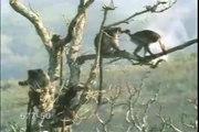 funny monkey sex