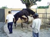 Horse reproduction