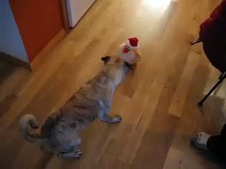 Pug vs. Dancing Chicken