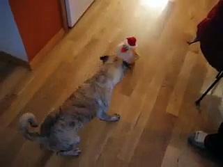 Pug vs. Dancing Chicken