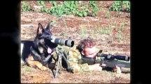 Cats vs Dogs World War lll - LOL Funniest Video Ever!!!
