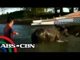 Dyan Castillejo swims with carabao