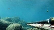pesca sub ischia