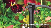 How to Setup a Drip Irrigation System for Containers/Potted Plants