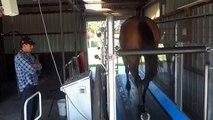 Horse Gym Australia - Peter Gelagotis Racing Stables - Training Session