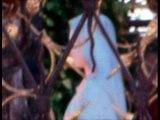 MARIE MIRACLE A SAN DAMIANO Avril 2009 La statue de pierre devient lumineuse et vivante
