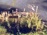 Frankreich 2006 2vo7 - Provence Rhone-Alpes Rivières pourpres ua.