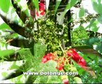Comment tailler les arbres fruitier en juillet
