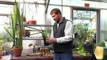 How to Propagate House Plants from Cuttings & Off Shoots