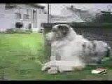 komik köpek si Komik Köpek Kedi Kuş Papağan Ördek Eşek Fare Hayvanlar İzle