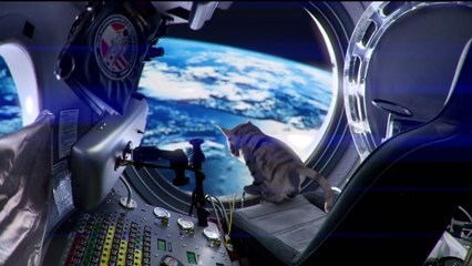 Cat jump fail par Chakass, le chat de l'extrême!