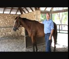 Horses Treatment with Photonic Light Therapy(Acupuncture without NEEDLES)