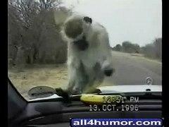 Monkey Torture