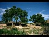 Rif Berber Alhoceima