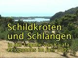 Schildkroten und Schlangen Kaiafa 0607.mp4