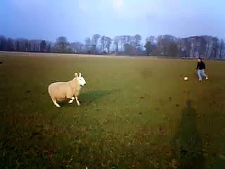 Sheep Fall