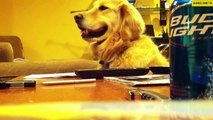 Dog Loves Guitar Playing - Funny clip