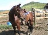 Horseback Riding 2008 - Steamboat Springs, Colorado