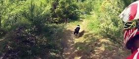 Descente VTT avec un chien