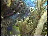 Scuba Diving Cozumel México Reef