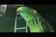 To Be or Not to Be: Ralph Nader Confides in Cardozo the Parrot