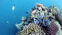Reefsleep, Whitsundays