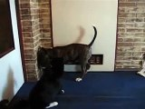 bull terrier puppy & cat (leave the cat alone ;))