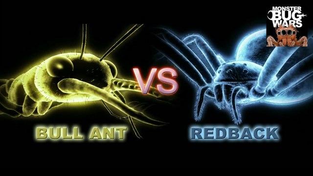MONSTER BUG WARS | Bull Ant Vs Redback Spider