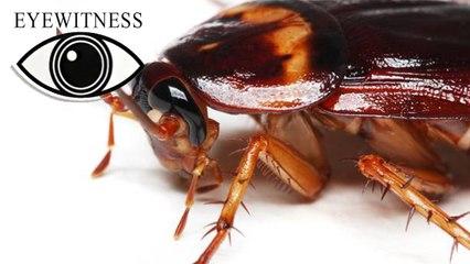 EYEWITNESS | Prehistoric Life