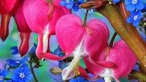 La Primavera - ( di Antonio Vivaldi )