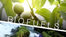 Biofuels: Renewable Jet Fuel