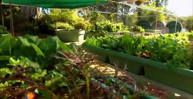 Backyard Aquaponics Garden gurus 1