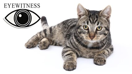 EYEWITNESS | Cat