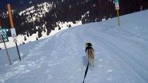 Ski-chien 14, Husky en pleine vitesse!