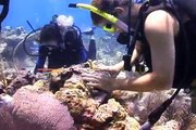 Restoring Coral Reefs in the Florida Keys and US Virgin Islands