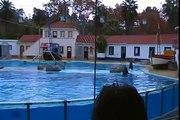 Baía dos Golfinhos - Jardim Zoológico de Lisboa - 1/4