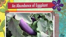 Eggplant and More Eggplant!