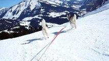 descente en yooner avec deux Huskies (11)