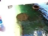 Pearl Harbor USS Arizona Sunken Ship