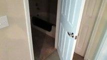 Regardez donc comment Mulder le chat parvient a ouvrir les portes