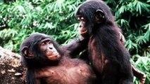 Curiosas practicas sexuales en animales