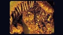 Vie et mort des sols par Lydia et Claude Bourguignon, micro-biologistes des sols