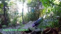 Que se passe-t-il quand on laisse une balle suspendue dans la forêt ?