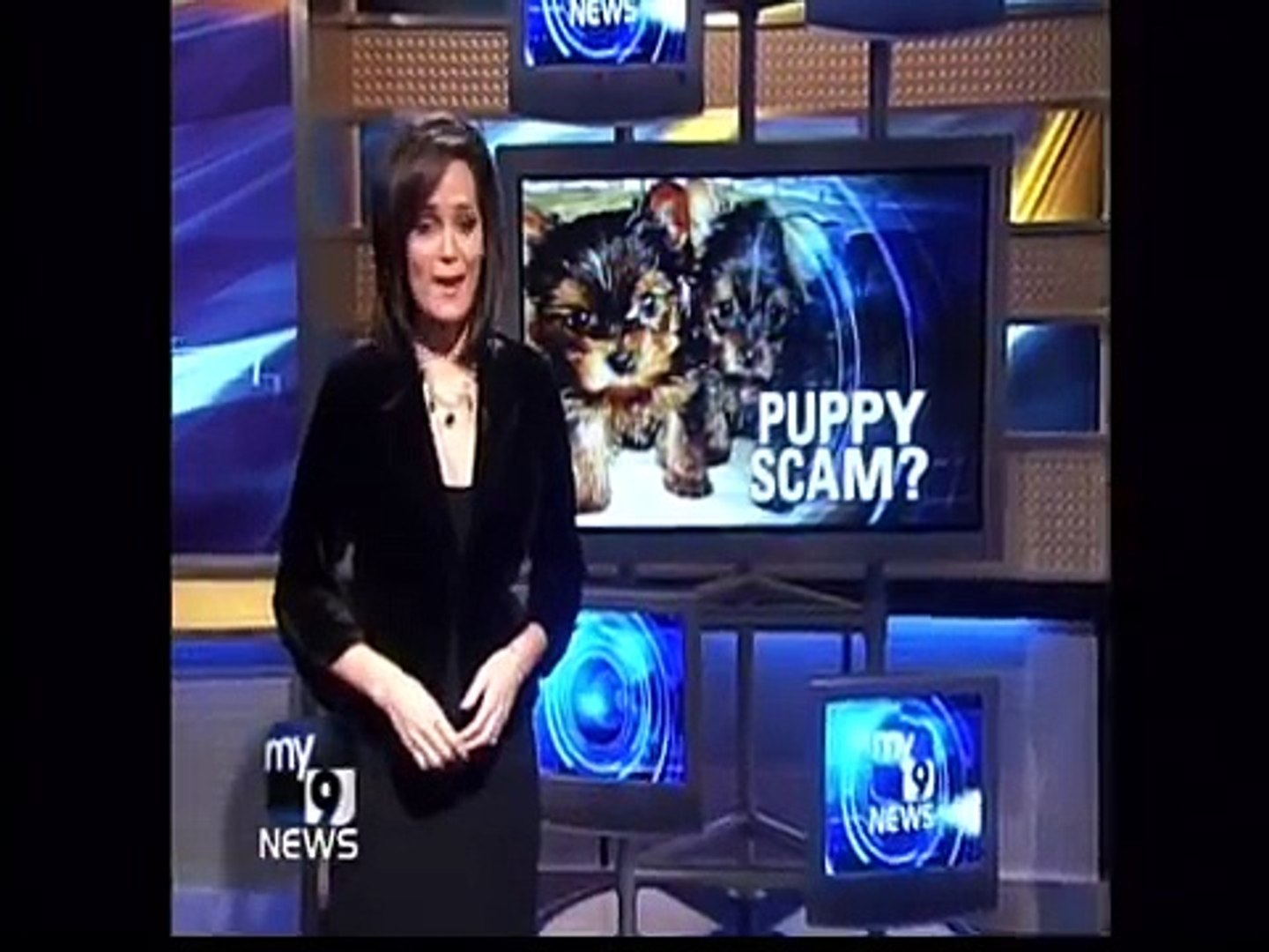 Pet Shipping and  Pet Transport Service Animals Away WARNING about Pet and Puppy Adoption SCAMS