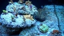 Rickets Reef - 90 Gal Day 115-122 Diatom Bloom p2