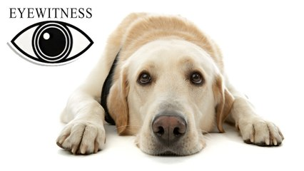 EYEWITNESS | Dog