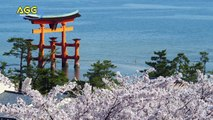 4K ULTRAHD SAKURA 4K映像 桜 (3840×2160)