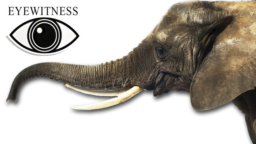 EYEWITNESS | Elephant
